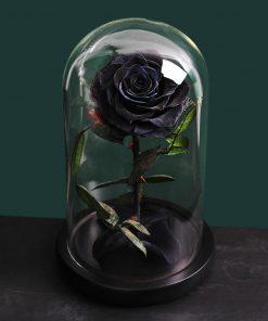 Rose Éternelle Cimetiere
